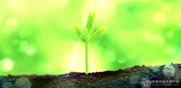 在阳光下幸福成长――奋进中的成都高新大源学校